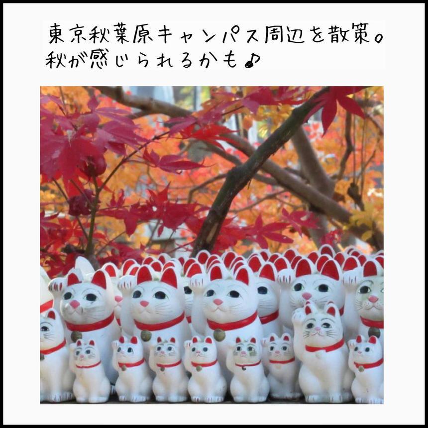 豪徳寺の招き猫