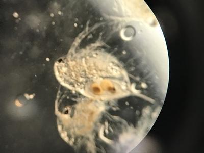 顕微鏡実習