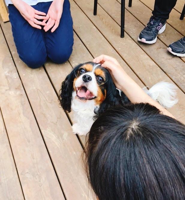 KIDOGSさんの保護犬