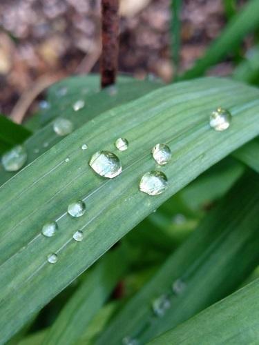 植物についた水滴
