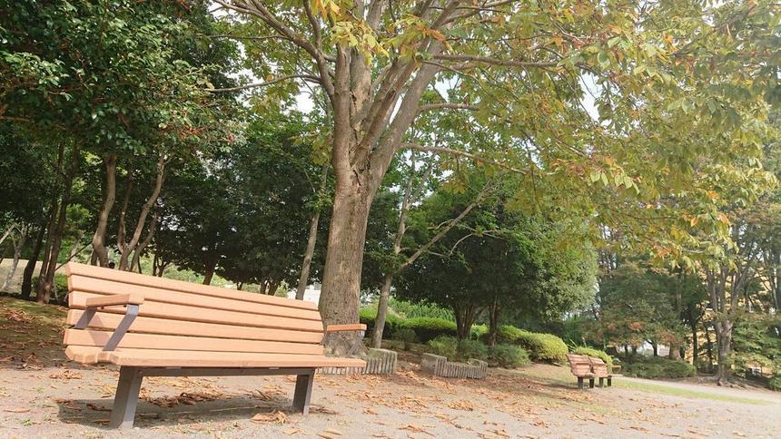 木々の葉も秋模様ですね♪